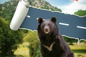 قلمرو خرس آسیایی بم در معرض تخریب است