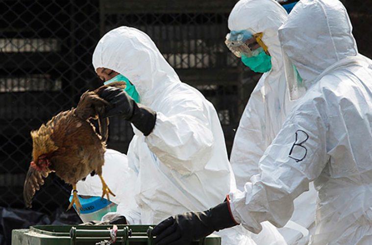 آنفلوآنزا فوق حاد پرندگان پشت دربهای استان در کمین است