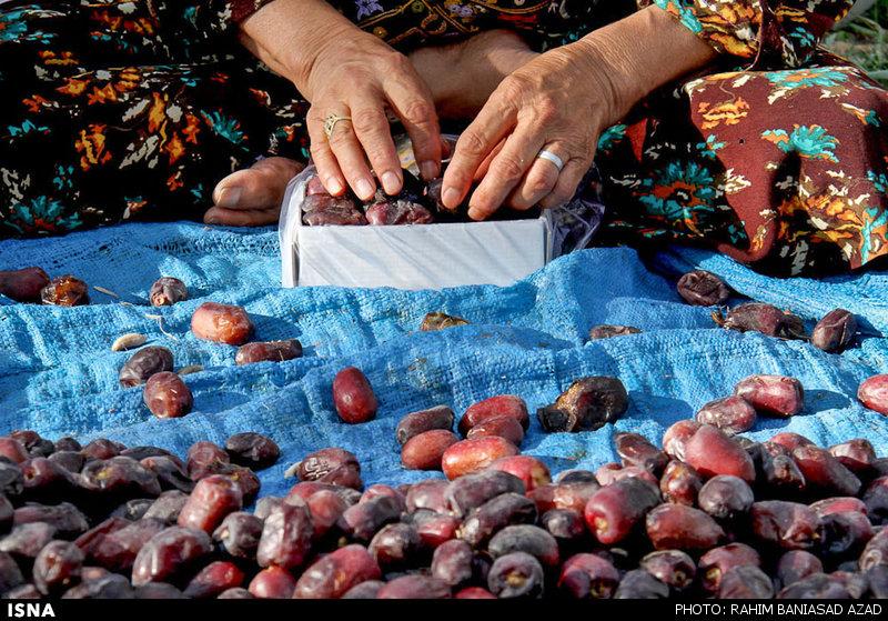 تاثیر بخشنامه بانک مرکزی بر کاهش صادرات خرمای استان کرمان