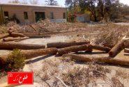توضیحات شهرداری بم در خصوص قطع درختان تعدادی از مدارس توسط آموزش و پرورش