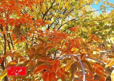 گزارش تصویری از روستای دریجان بم در فصل پاییز